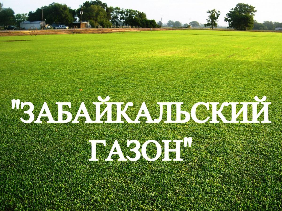 """Газонная трава, травосмесь """"Забайкальский газон"""" 0,5 кг"""