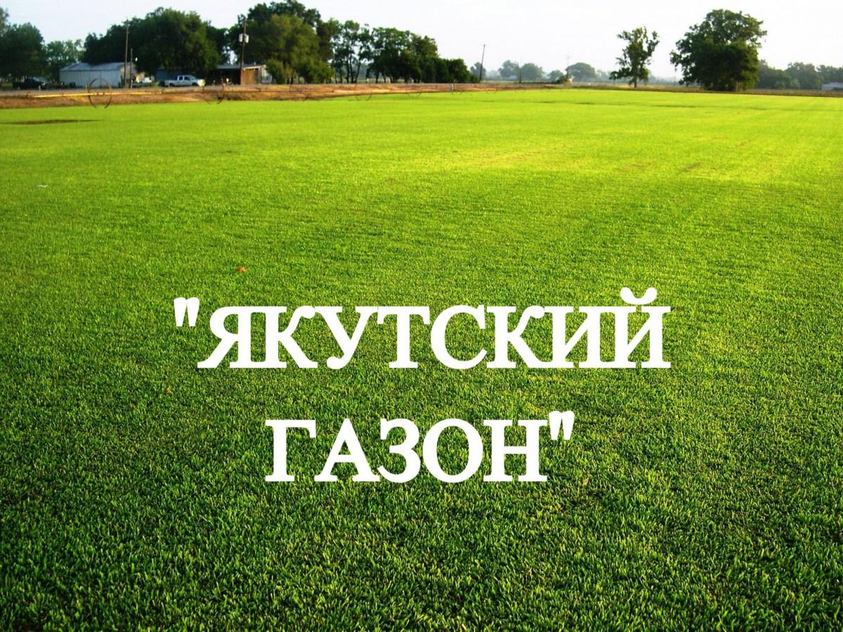 """Семена газона """"Якутский газон"""" ОПТОМ"""